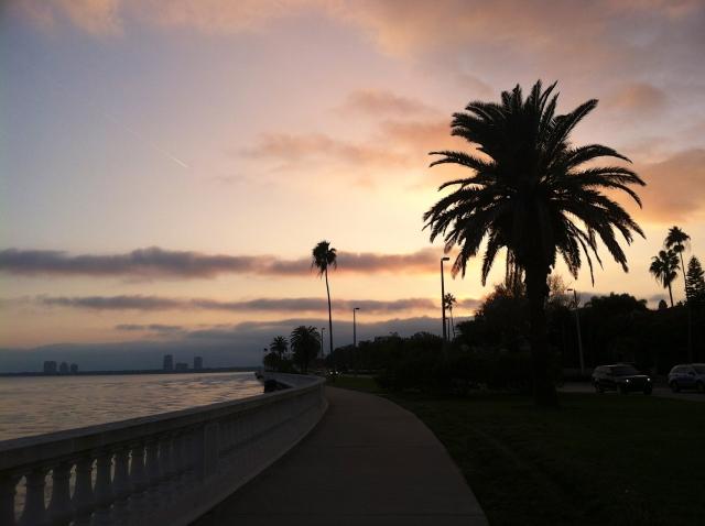 tampa florida palm trees