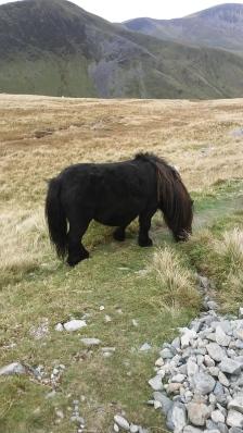 snowdonia Wales horse