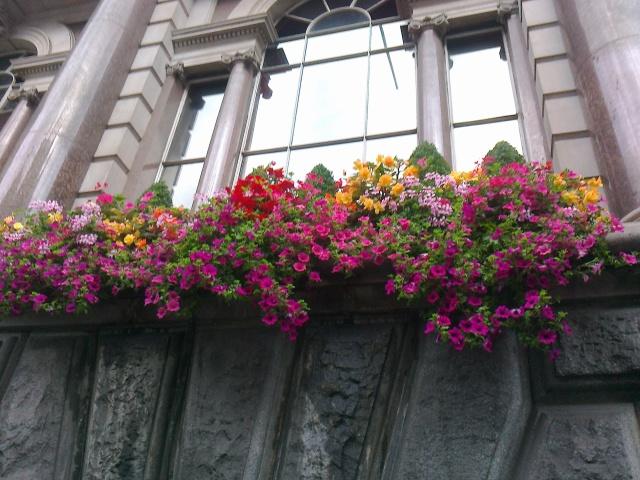 London travel flowers