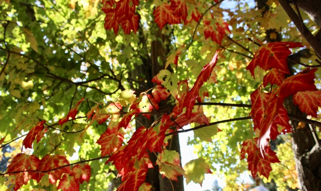 usa travel leaves autumn