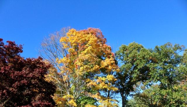 usa autumn massachusetts