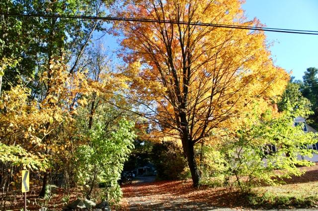 new england autumn travel usa