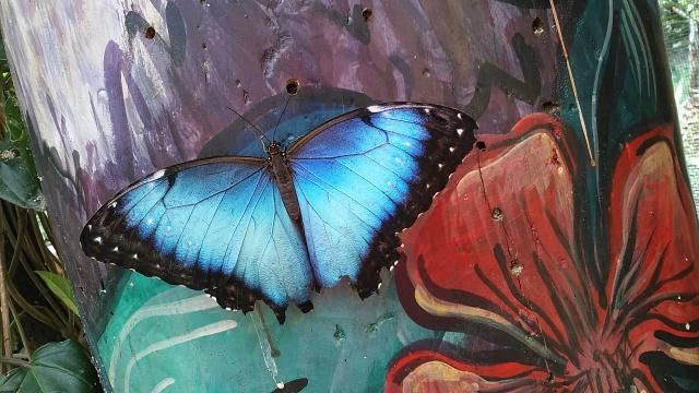 mindo ecuador butterfly farm
