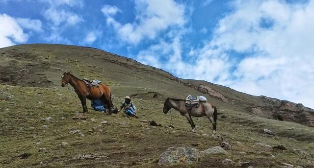 cusco peru horses travel