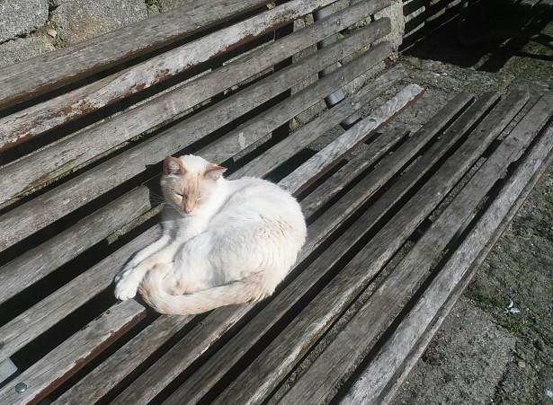 porto portugal cat