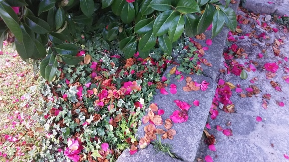 porto portugal flowers