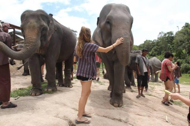 Thailand elephants Chiang mai travel