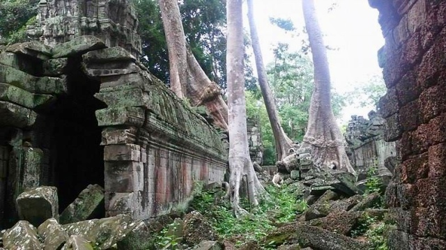 cambodia siem reap temple nature