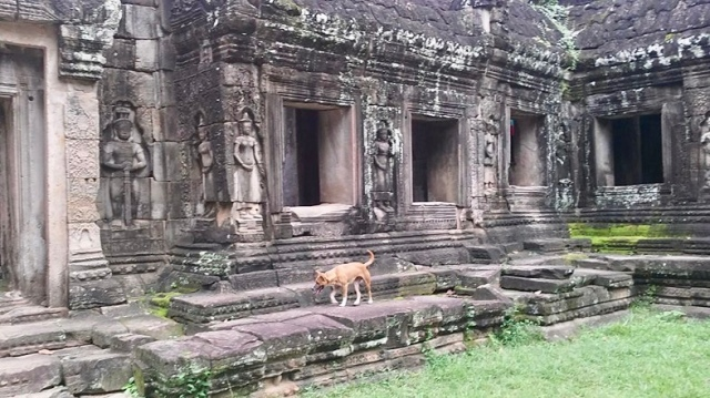 Angkor wat temple dog
