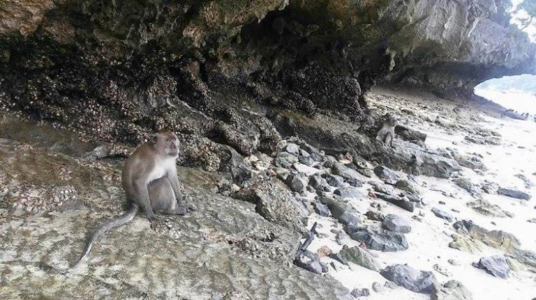 monkey on the beach image thailand