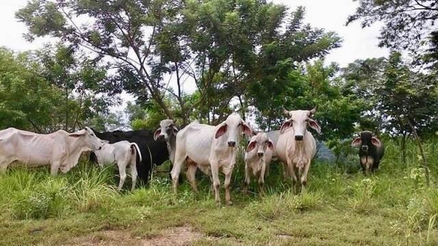 animals Costa Rica