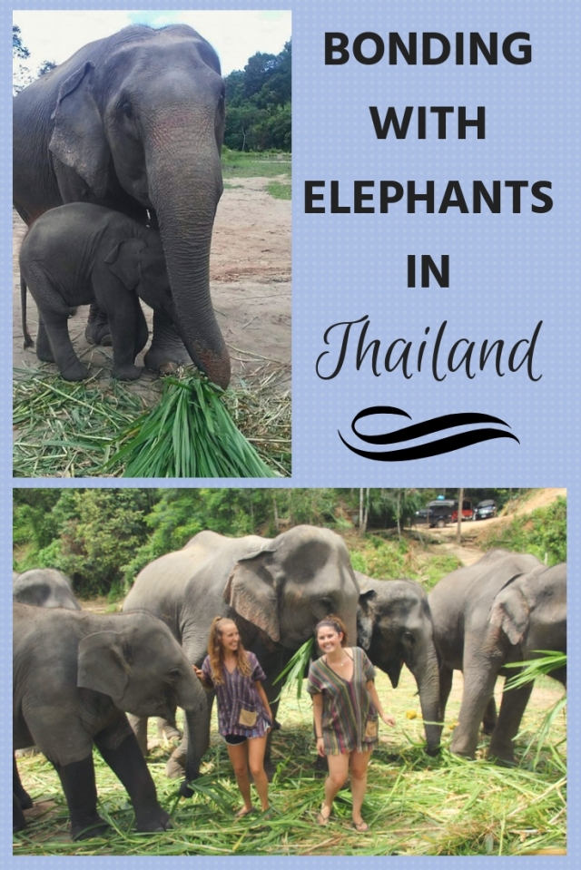 bonding with elephants in Thailand, budget travel Southeast Asia