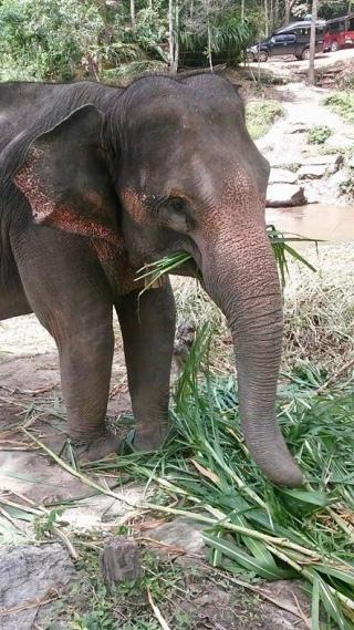 elephants Thailand travel