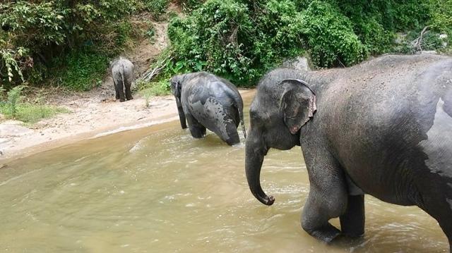 elephants Thailand Chiang mai