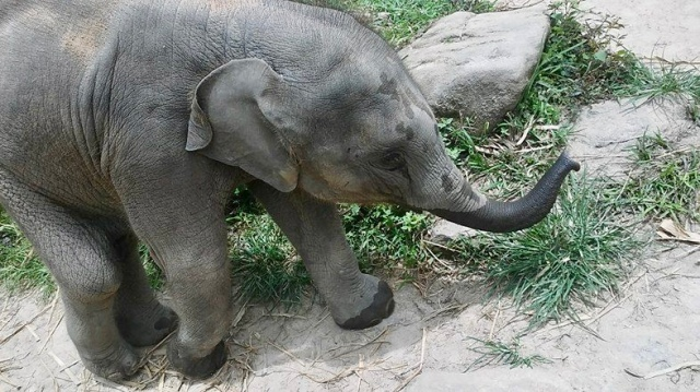 baby elephant Thailand travel