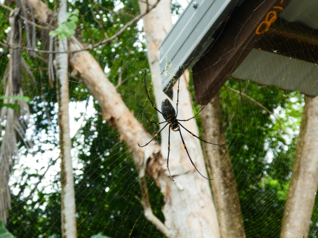 budget travel Australia spiders