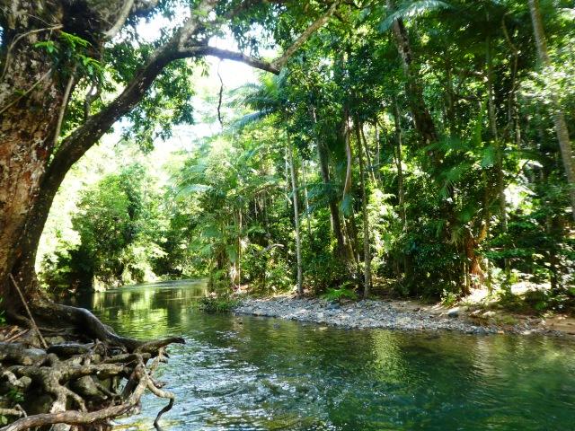 Daintree rainforest travel