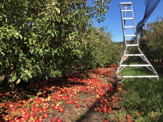 apple farm Australia travel