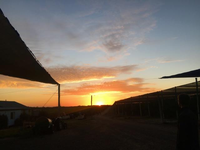 farm work Australia sunrise