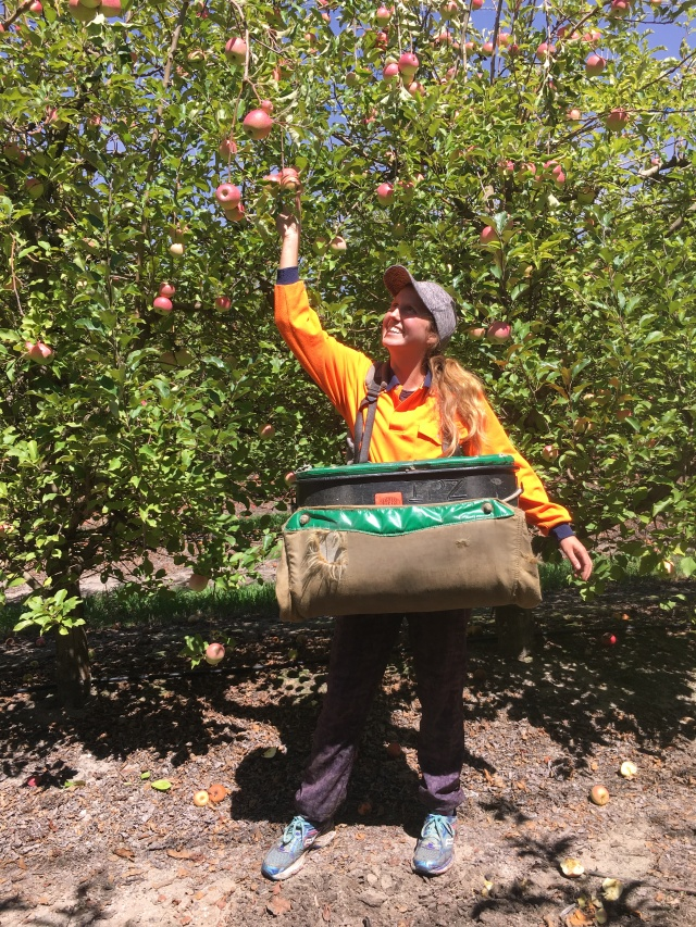 apple picking farm work Australia