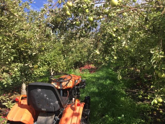 apple picking Australia farm work tractor work