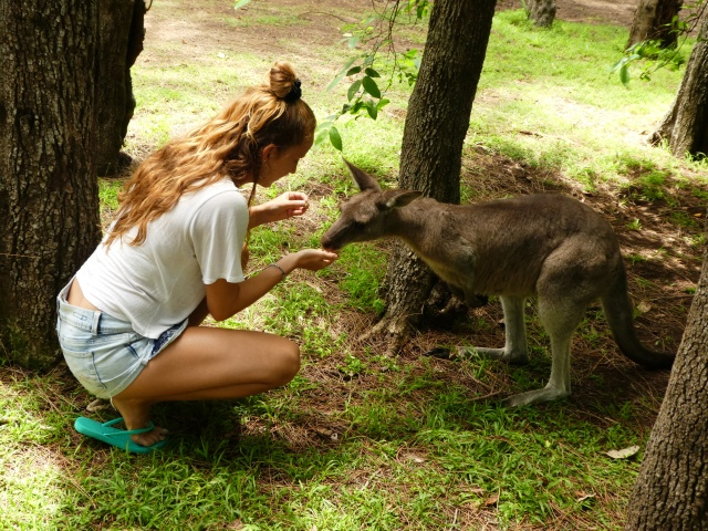 kangaroo travel Australia