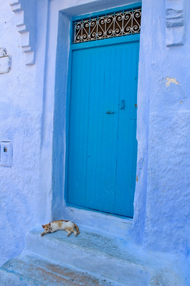 chefchaouen morocco cats