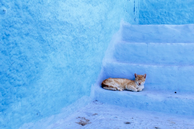 Morocco travel cat