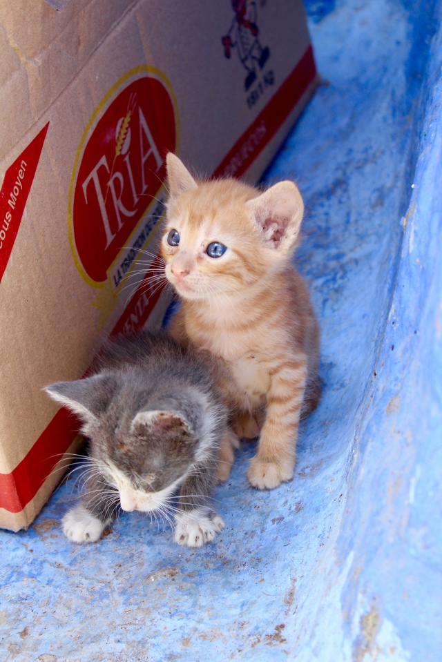 chefchaouen kitten photography