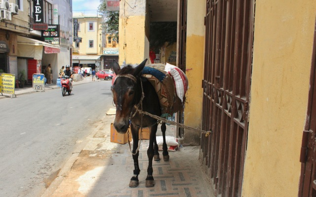 travel morocco-donkey.jpg