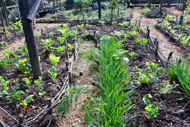 garden wattle beds