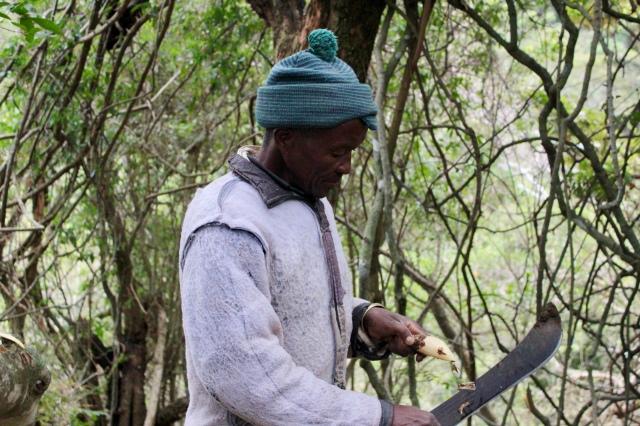 south africa healer