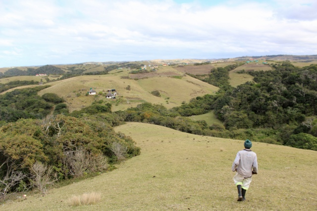 south africa transkei forest