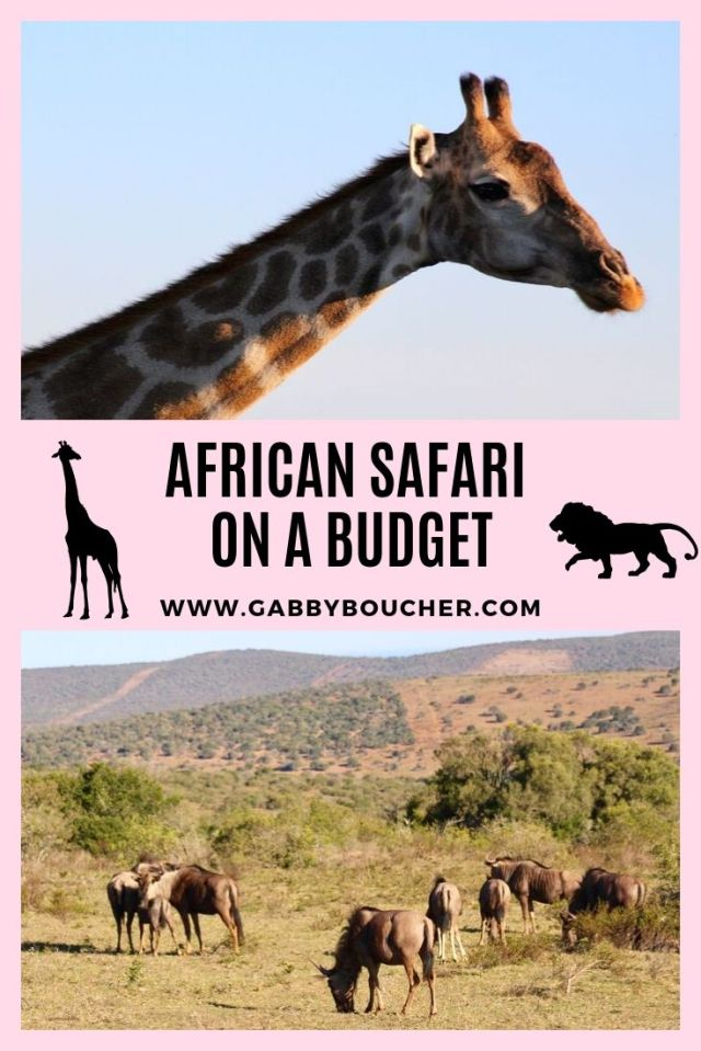 african safari on a budget-1