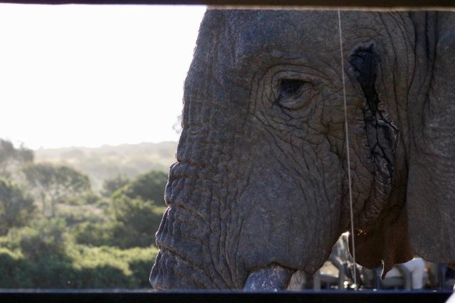 elephant close up.jpg