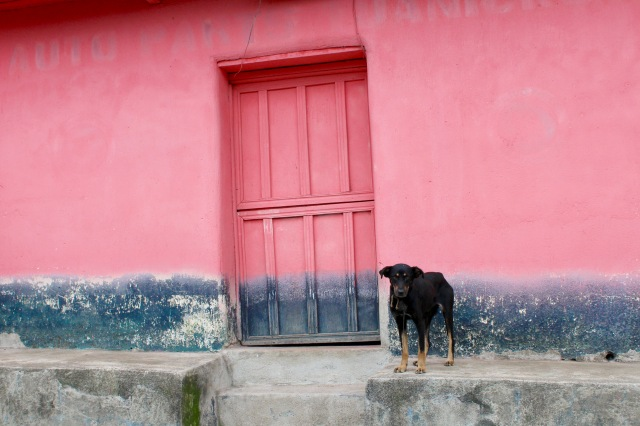 lake atitlan dog guatemala.jpg