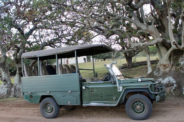 safari schotia game drive car