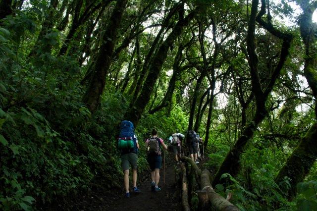 hiking tropical rainforest