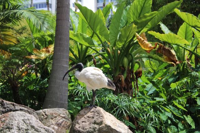 bird australia wildlife